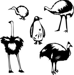 Five stylized vector illustrations of flightless birds