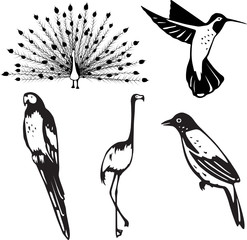 Stylized vector depictions of five attractive birds