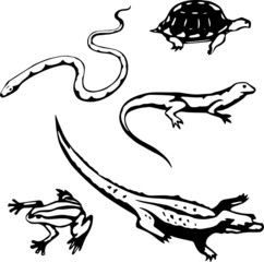 Five stylized, vector illustrations of reptiles and amphibians