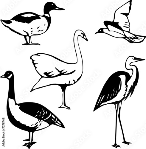 Five stylized vector illustrations of water fowl