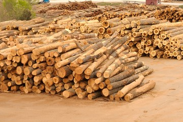 Stacks and piles of logs at a lumberyard.