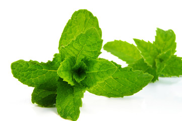 Closeup of fresh mint leaves, on white