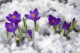 Fototapety Spring