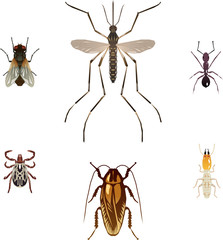 Six vector pest insects