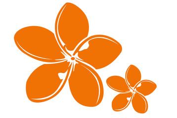 fleur de frangipanier 1