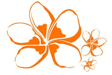 fleur de frangipanier 2