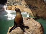 Seelöwe mit Möwe beim Sonnenbad