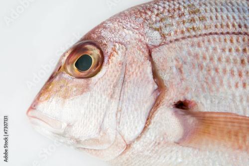 Ojo de pescado de moremi imagen libre de derechos for Espejo ojo de pescado