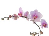 bunch of orchid with lila flowers poster