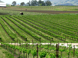 Vineyards of Santa Barbara California