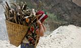 nepali lady carrying firewood, annapurna, nepal poster