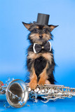Jazz dog poster