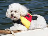 Nautical Pup poster