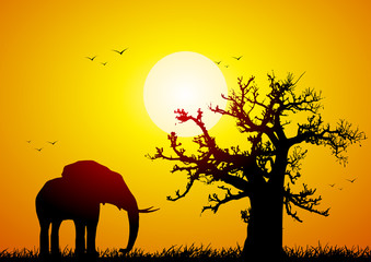 Elephant and baobab at sunset