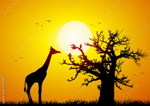 Leinwanddruck Bild Giraffe and baobab at sunset