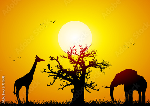 Leinwanddruck Bild Elephant and giraffe with a baobab at sunset