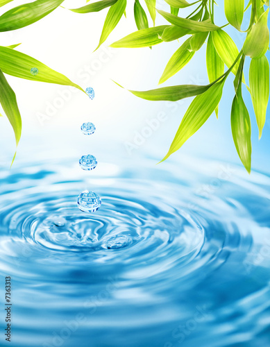 Poster Bamboe Water drops folling from a bamboo leaf