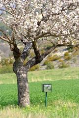 boite aux lettre sous l'arbre en fleurs