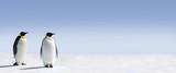 Penguin Panorama-