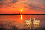 Red sunset with a couple of swans in the foreground poster