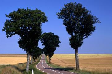 Route entre Ouanne et Merry-le-Sec 001