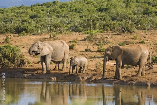 A Quiet Family Moment at the Waterhole