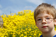 Young boy in glasses and yellow flowers on spring field