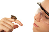 Girl looking at a frog wearing saftey glasses