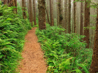 Path Through The Misty Forest - Cape Lookout, Oregon