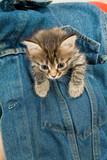 Cat And Denim poster