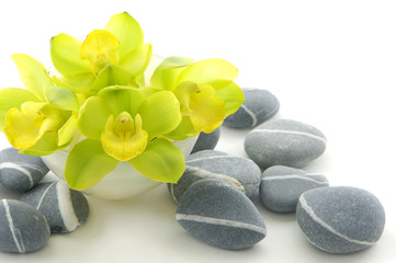 beautiful orchid flower with stone