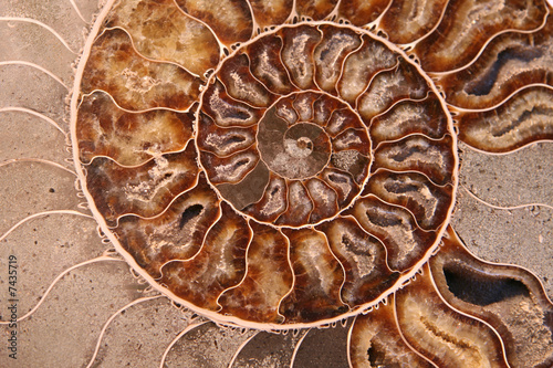 Abstract spiral pattern of ammonite section