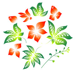 Set of the floral elements on a white background