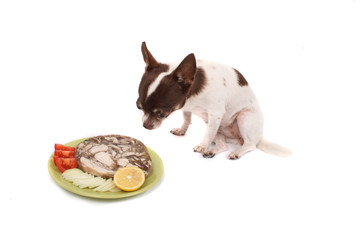 chihuahua and dinner