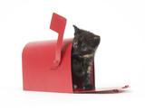 Mail Order Kitten poster