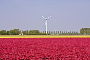 Windmills and tulips: The Netherlands!!!