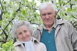 happy grandparents against a background of flowering garden poster