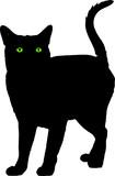 gato preto poster