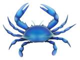 Eastern Blue Crab
