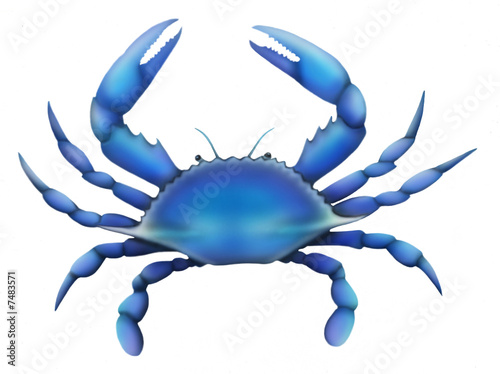 Eastern Blue Crab - 7483571