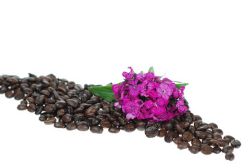 Coffee beans and Pink Flower