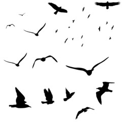 wildlife bird silhouettes