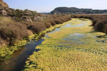 contaminacion de aguas