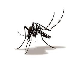 zanzara tigre (Aedes albopictus)