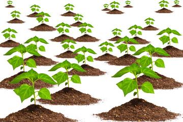 plant background