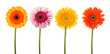 four flowers isolated - clipping path
