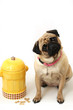 Pug & Fire Hydrant