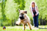 Running dog on green grass - Fine Art prints
