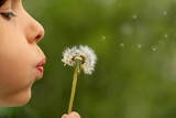 Fototapety child blowing dandelion clock