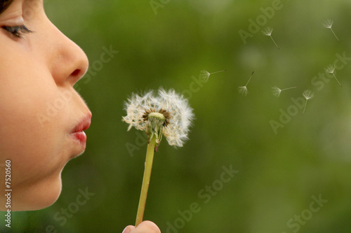 child blowing dandelion clock - 7520560